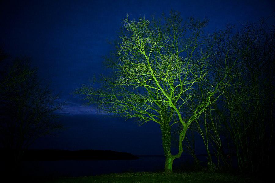dotseverine_greentree_H900